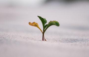 成長する人